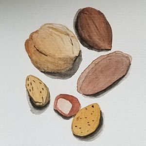 Accessories - Mixed Nuts Watercolor 4in x 6in